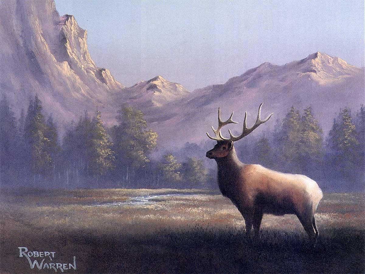 Rocky-Mountain-Meadow1200